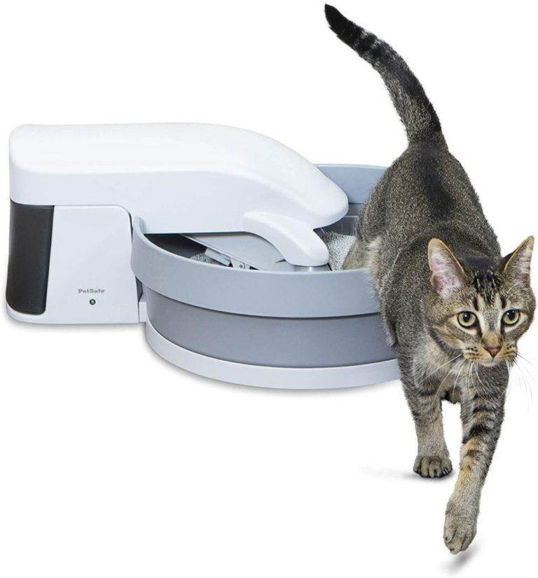 petsafe gato